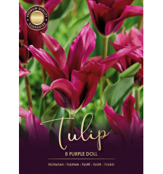 TULPĖS PURPLE DOLL