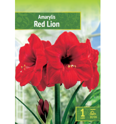 AMARILIAI RED LION