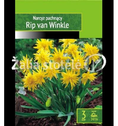 NARCIZAI RIP VAN WINKLE