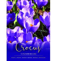 KROKAI PAVASARINIAI FLOWER REC PURP 73227