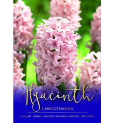 HIACINTAI APRICOT PASSION 75021