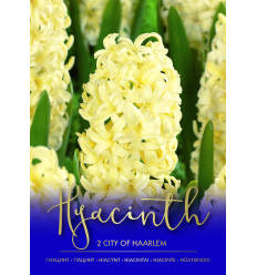 HIACINTAI CITY OF HAARLEM 73420