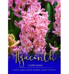 HIACINTAI GIPSY QUEEN 73421