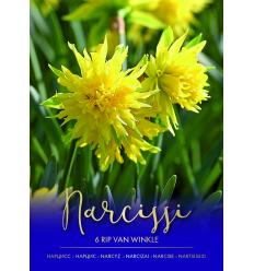 NARCIZAI RIP VAN WINKLE 73471