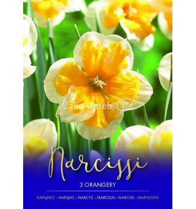 NARCIZAI ORANGERY 73478