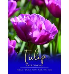TULPĖS BLUE DIAMOND 73290