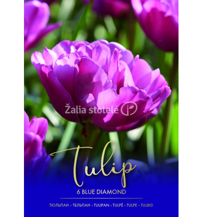 TULPĖS BLUE DIAMOND 73290