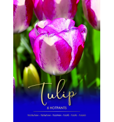 TULPĖS HOTPANTS 73430