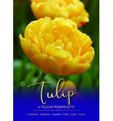 TULPĖS YELLOW POMPONETTE 73296