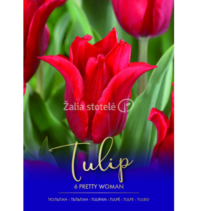 TULPĖS PRETTY WOMAN 71333