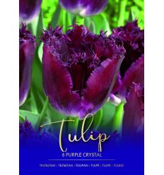 TULPĖS PURPLE CRYSTAL 734456
