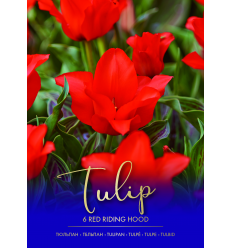 TULPĖS RED RIDING HOOD 732070