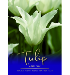 TULPĖS TRES CHIC 33114