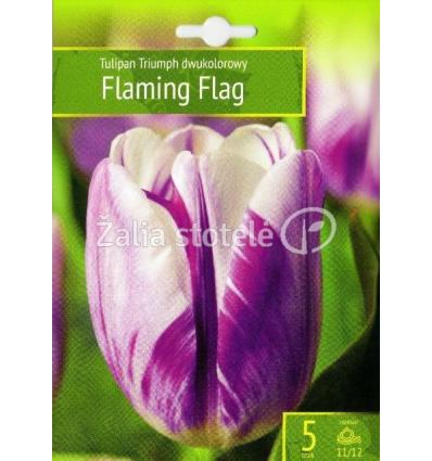 TULPĖS FLAMING FLAG