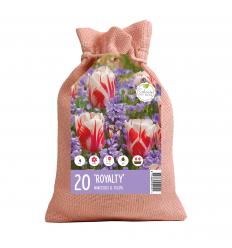 KOLEKCIJA ROYALTY 10 x Tulipa Sorbet 10 x Scilla Siberica