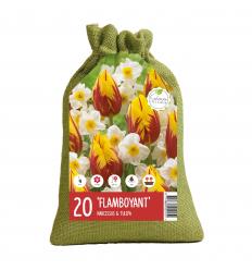 KOLEKCIJA FLAMBOYANT 12 x Tulipa Washington 8 x Narcissus Cragford