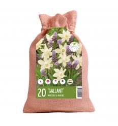 KOLEKCIJA GALLANT 12 x Muscari Purple Rain 8 x Narcissus Snow Baby