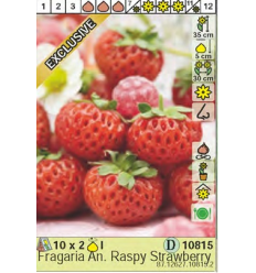 BRAŠKĖS ANANASSA RASPY STRAWBERRY